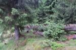 Aus Totholz wächst neues Leben