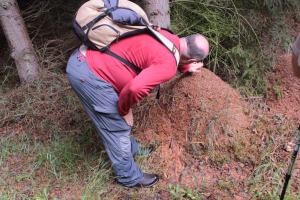 Ameisenhaufen mit König :-)