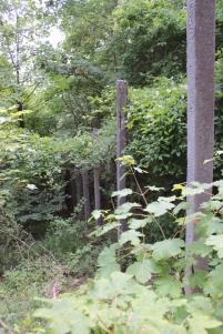 ehemaliger Grenzzaun im Wald auf den Mainzer Köpfen